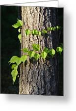 Green Leaves At Walden Pond Greeting Card by Christina Solstad
