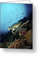 Green Sea Turtle Resting On A Plate Greeting Card by Mathieu Meur