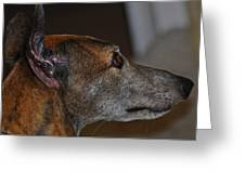 Greyhound Greeting Card by Peter  McIntosh