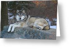 Grizzer Intelligence Personified Greeting Card by Gerry Sibell