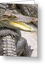 Group Of Crocodiles Greeting Card by Jorgo Photography - Wall Art Gallery