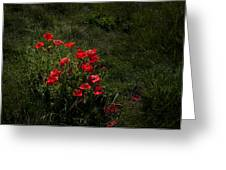 Group Of Poppies Greeting Card by Svetlana Sewell