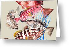 Grouper Montage Greeting Card by KEVIN BRANT