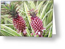 Growing Red Pineapples Greeting Card by Brandon Tabiolo - Printscapes