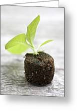 Growth Greeting Card by Frank Tschakert