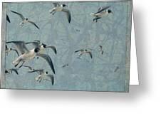 Gulls Greeting Card by James W Johnson