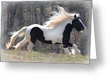 Gypsy Stallion Esperanzo Greeting Card by Terry Kirkland Cook