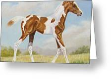 Half Arabian Pinto Filly Greeting Card by Dorothy Coatsworth
