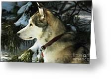 Handsome Husky Nanuk Greeting Card by Marjorie Imbeau