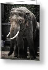 Hanging Out Greeting Card by Joan Carroll