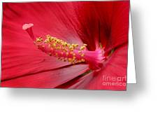 Hardy Hibiscus Greeting Card by Jeannie Burleson