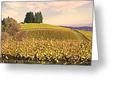 Harvest Time In A Vineyard Greeting Card by Margaret Hood