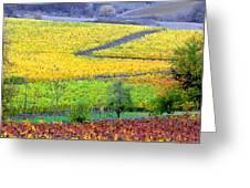 Harvest Time Greeting Card by Margaret Hood