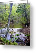 Haw Creek Greeting Card by Marty Koch