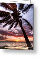 Hawaiian Coconut Palm Sunset Greeting Card by Dustin K Ryan