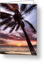 Hawaiian Coconut Palm Sunset Greeting Card by Dustin K Ryan