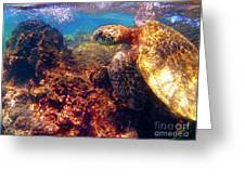 Hawaiian Sea Turtle - On The Reef Greeting Card by Bette Phelan