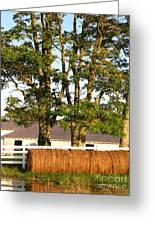 Hay Bales And Trees Greeting Card by Todd A Blanchard
