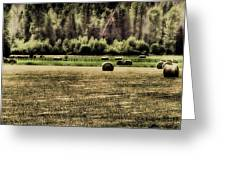 Hay Harvest Greeting Card by David Patterson