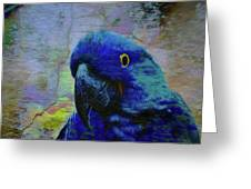 He Just Cracks Me Up Greeting Card by Jan Amiss Photography