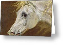 Head Of A Grey Arabian Horse  Greeting Card by Martin Theodore Ward