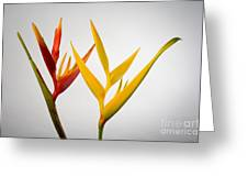 Heliconia Greeting Card by Tomas del Amo - Printscapes