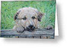 Hello Puppy Greeting Card by Yvonne Johnstone