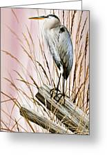 Herons Watch Greeting Card by James Williamson