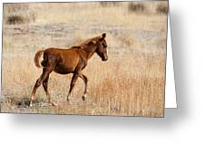 High Stepping Greeting Card by Mike  Dawson