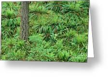 Hillside Ferns Greeting Card by Greg Vaughn - Printscapes