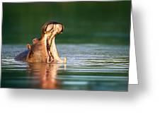 Hippopotamus Greeting Card by Johan Swanepoel