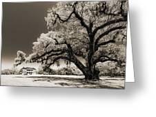 Historic Drayton Hall In Charleston South Carolina Live Oak Tree Greeting Card by Dustin K Ryan
