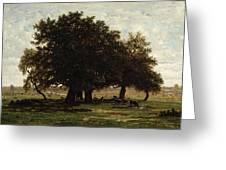 Holm Oaks Greeting Card by Pierre Etienne Theodore Rousseau