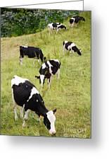Holstein Cattle Greeting Card by Gaspar Avila