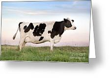 Holstein Dairy Cow Greeting Card by Cindy Singleton