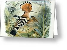 Hoopoe Greeting Card by Edouard Travies