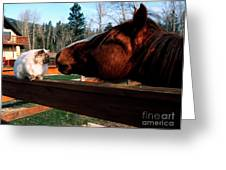 Horse And Cat Nuzzle Greeting Card by Thomas R Fletcher