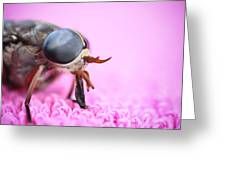 Horse Fly Greeting Card by Ryan Kelly