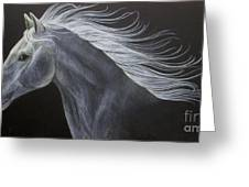 Horse Greeting Card by Susan Clausen