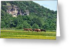 Horses On The Rubideaux Greeting Card by Marty Koch