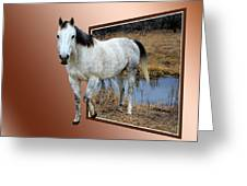 Horsing Around Greeting Card by Shane Bechler