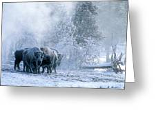 Huddled For Warmth Greeting Card by Sandra Bronstein