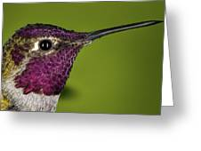 Hummingbird Head Shot With Raindrops Greeting Card by William Lee