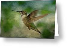 Hummingbird In Flight II Greeting Card by Sandy Keeton