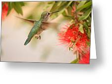 Hummingbird In Paradise Greeting Card by Penny Meyers