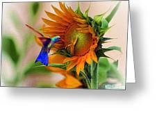 hummingbird on sunflower Greeting Card by John  Kolenberg