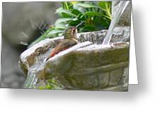 Hummingbirds Do Take Baths Greeting Card by Jennie Marie Schell