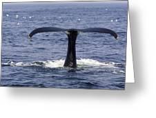 Humpback Whale Swimming Greeting Card by Tim Laman