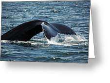 Humpback Whale Tail Cape Cod Massachusetts Greeting Card by Michelle Wiarda