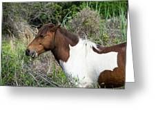 Hungry Horse - Assateague Island - Maryland Greeting Card by Brendan Reals